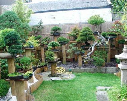 Jardines de bons i inspiraci n para mostrar nuestros - Jardin de bonsais ...